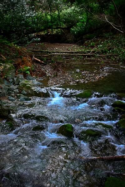 Muir Wood Stream at night