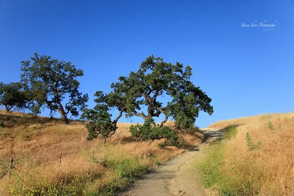 Las Virgenes Canyon Open Space Preserve 3