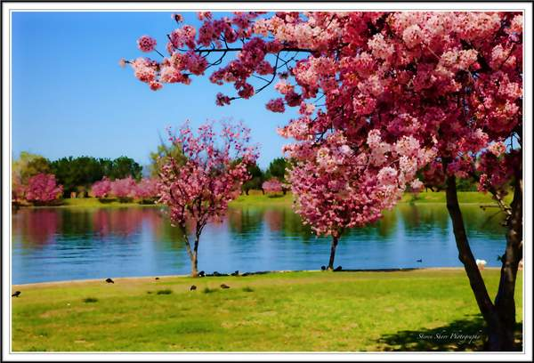 Springtime at Lake Balboa