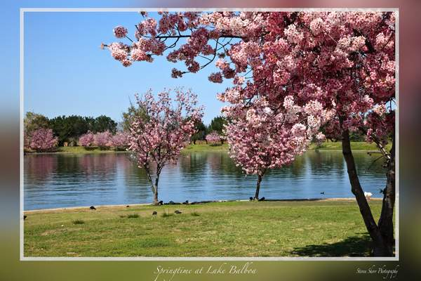 Springtime at Lake Balboa 2