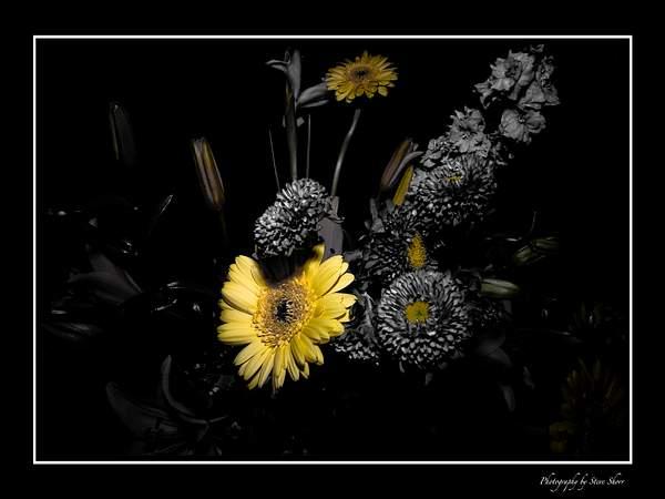 Floral Surreal