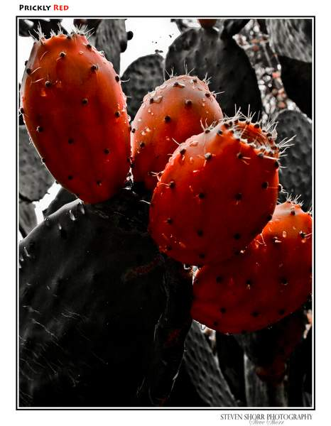 Prickly Red