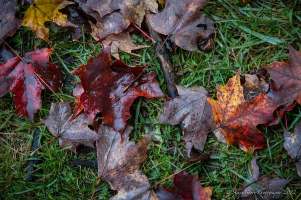 Vermont Fall Colors-3