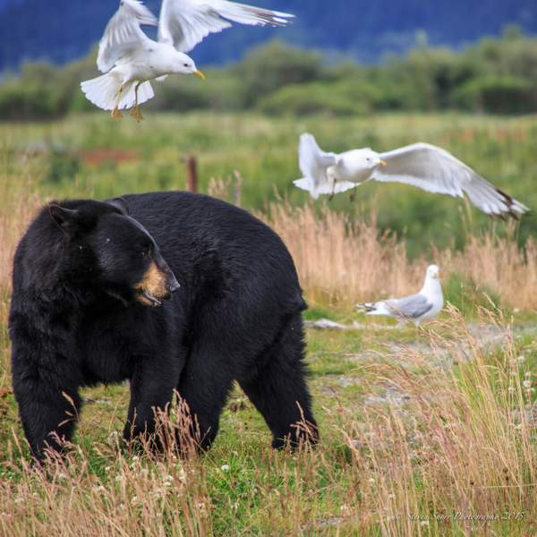 Black Bear and Friends