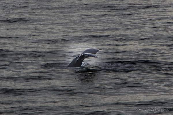Whale Ho!