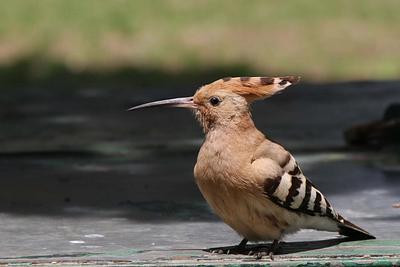 Bird & animals