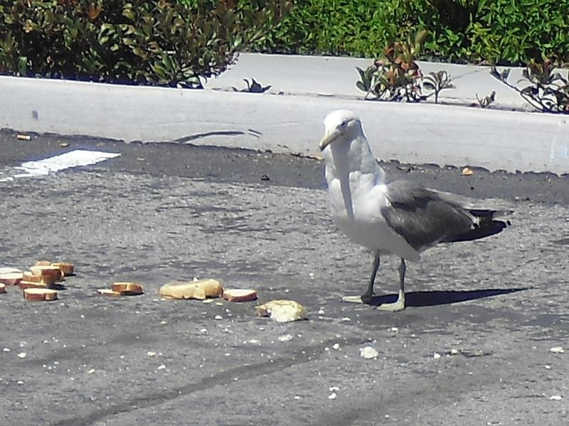 bird-with-attitude