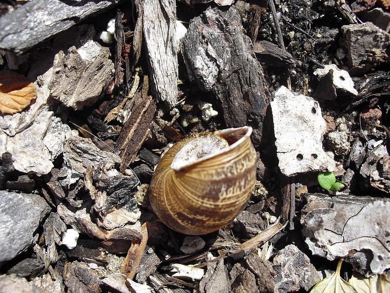 snail-shell-closeup copy