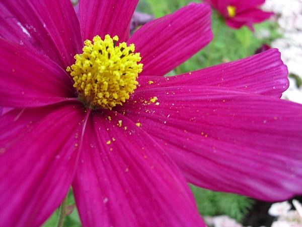 pollen-flower copy by Suzanne