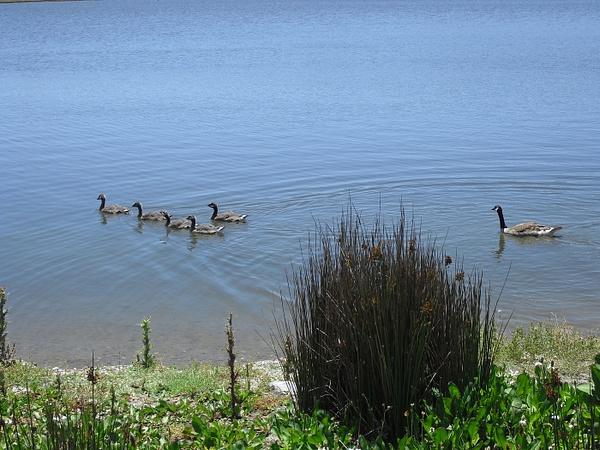 family-swim copy by Suzanne