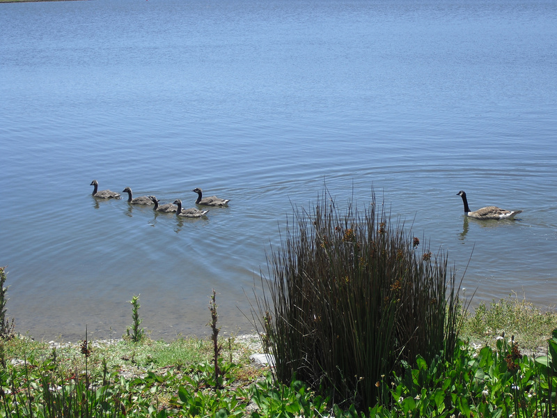 family-swim copy