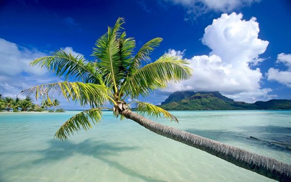 tropical-beach-background-16 by Ric  Lopez
