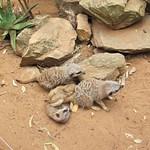 Cuddly Creek Australia