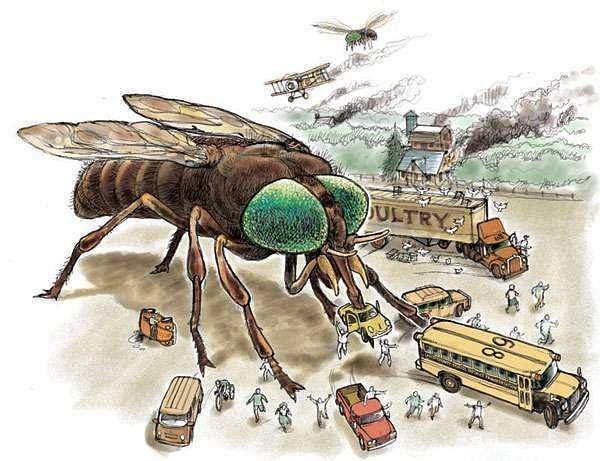 king-buzz