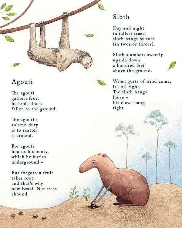 sloth-and-agouti