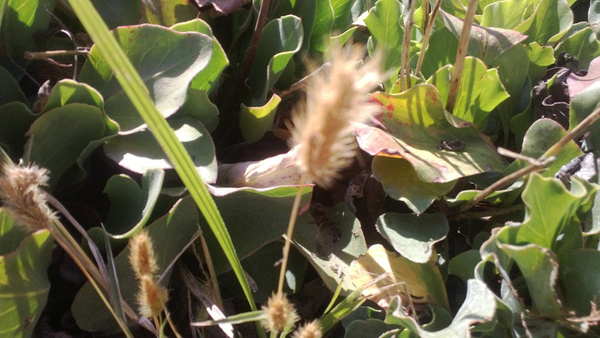 Wheat looking thingy by OsheaPiscopo