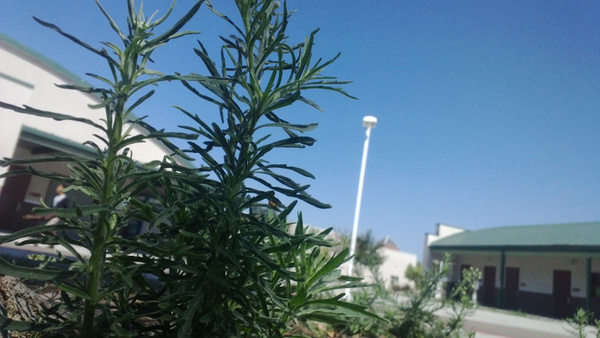 Plant by OsheaPiscopo