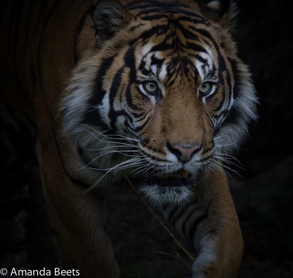 Amandabeets' Photoblog
