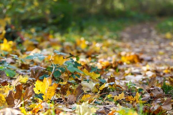 Сказочная осень by Evgeniya Prins