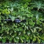Рождественский рынок в Дессау