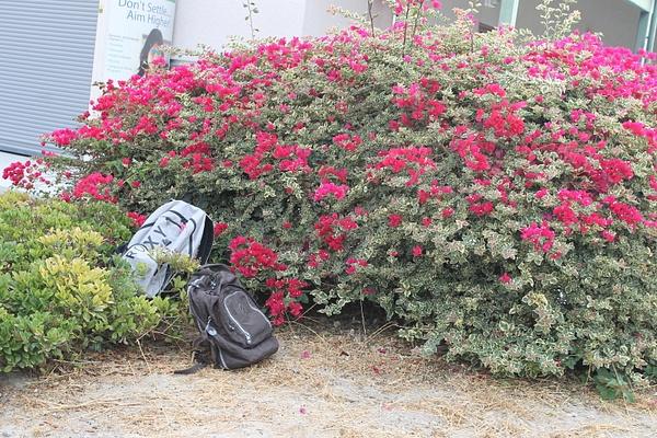 Backpack pics by KarlaFrancis278