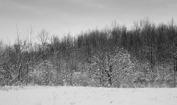 Black and White by bob bielecki