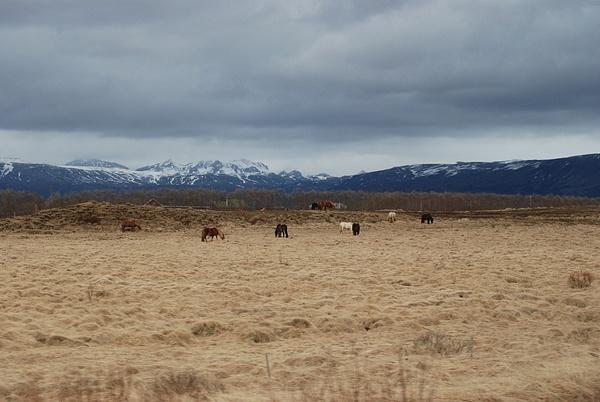Iceland 0413 127 by Verryl V Fosnight Jr