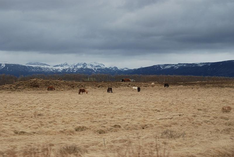 Iceland 0413 127
