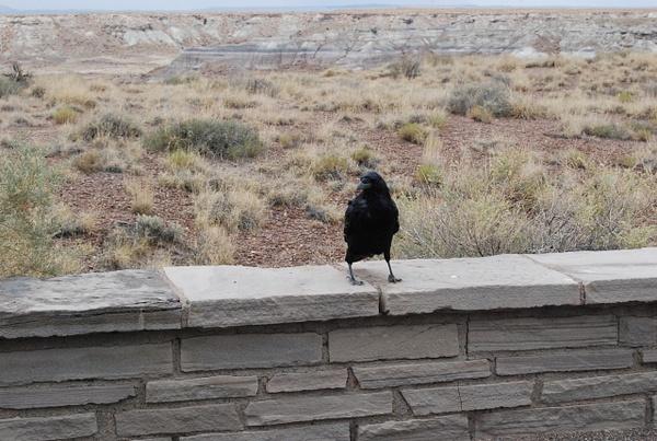 Albuquerque Monte Vista Greeley 08201436 test by Verryl...