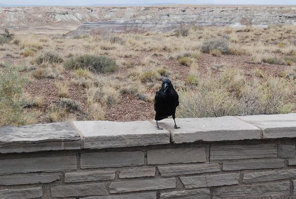 Albuquerque Monte Vista Greeley 08201437 test by Verryl...