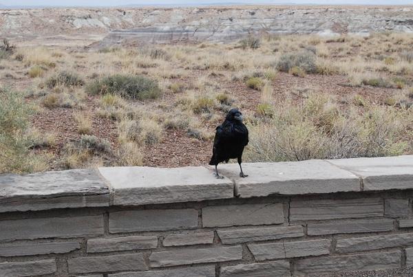 Albuquerque Monte Vista Greeley 08201438 test by Verryl...