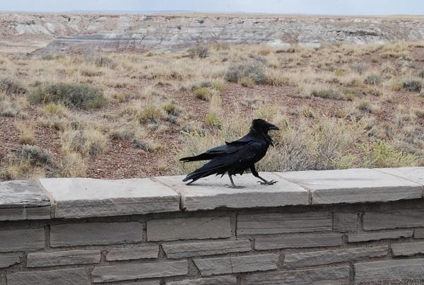 Albuquerque Monte Vista Greeley 08201439 test by Verryl...