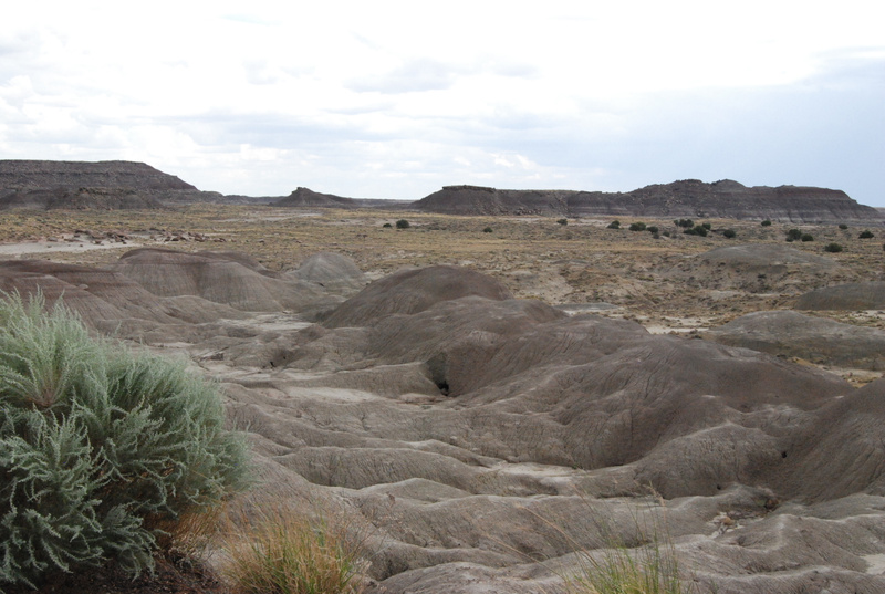 Albuquerque Monte Vista Greeley 08201419 test