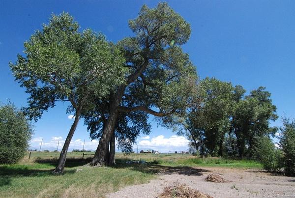 Albuquerque Monte Vista Greeley 082014183 test by Verryl...