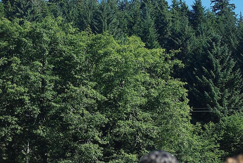 2  KetchikanRainForestWildlifeSanctuary   (38sharp)