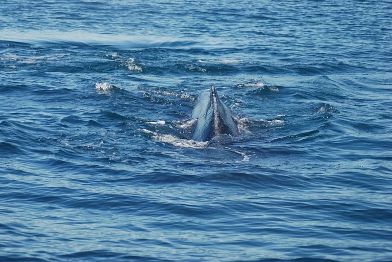 3 Juneau_WhaleWatching (12)