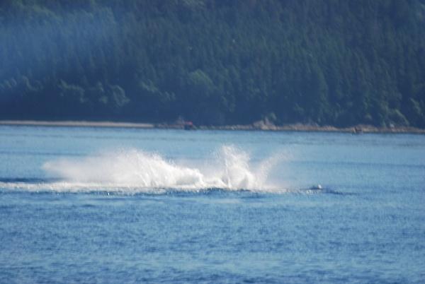 3 Juneau_WhaleWatching (24) by Verryl V Fosnight Jr
