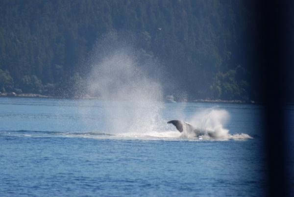 3 Juneau_WhaleWatching (22) by Verryl V Fosnight Jr