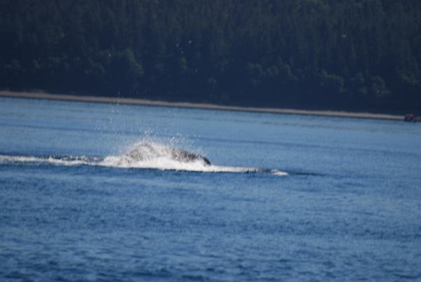 3 Juneau_WhaleWatching (25) by Verryl V Fosnight Jr