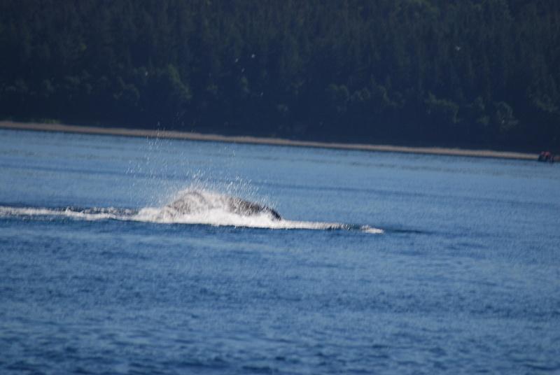 3 Juneau_WhaleWatching (25)