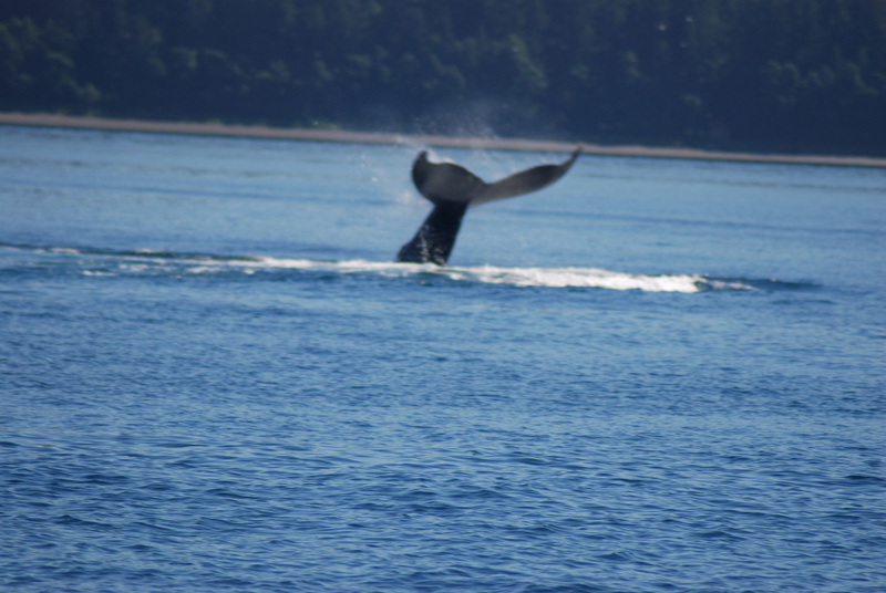 3 Juneau_WhaleWatching (26 aS)