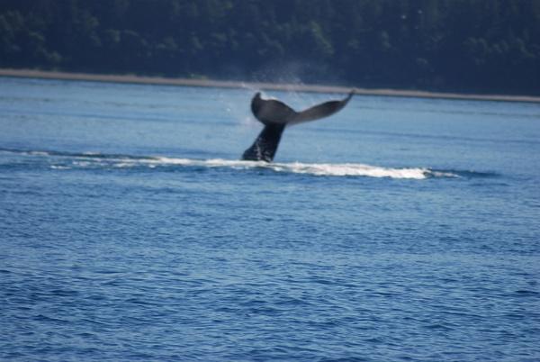 3 Juneau_WhaleWatching (26) by Verryl V Fosnight Jr