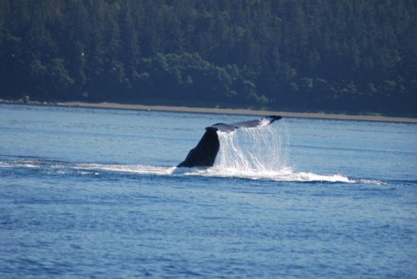 3 Juneau_WhaleWatching (28) by Verryl V Fosnight Jr