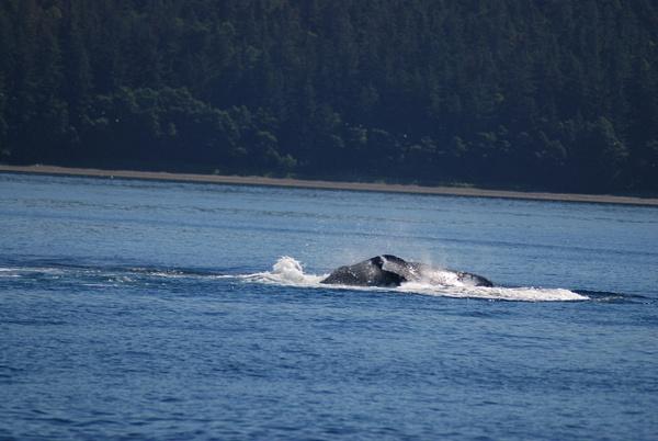 3 Juneau_WhaleWatching (27) by Verryl V Fosnight Jr