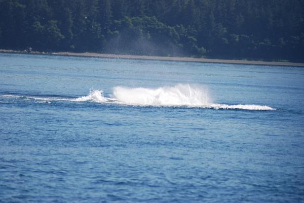 3 Juneau_WhaleWatching (29) by Verryl V Fosnight Jr