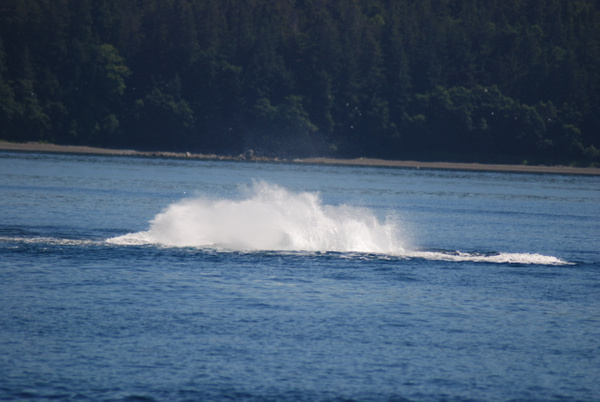 3 Juneau_WhaleWatching (30) by Verryl V Fosnight Jr