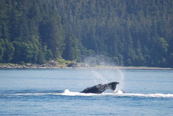 3 Juneau_WhaleWatching (33) by Verryl V Fosnight Jr