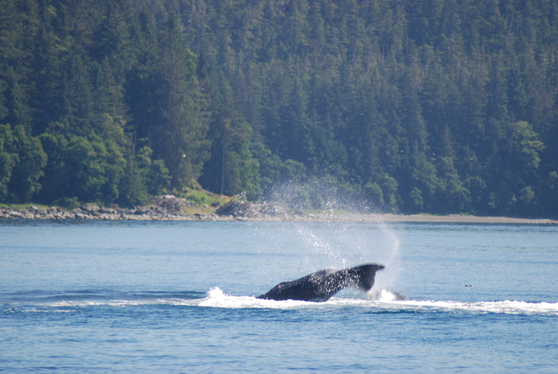 3 Juneau_WhaleWatching (33)