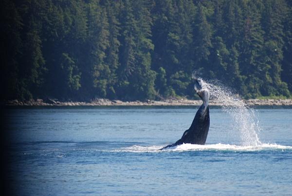 3 Juneau_WhaleWatching (36) by Verryl V Fosnight Jr