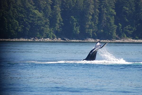 3 Juneau_WhaleWatching (37) by Verryl V Fosnight Jr